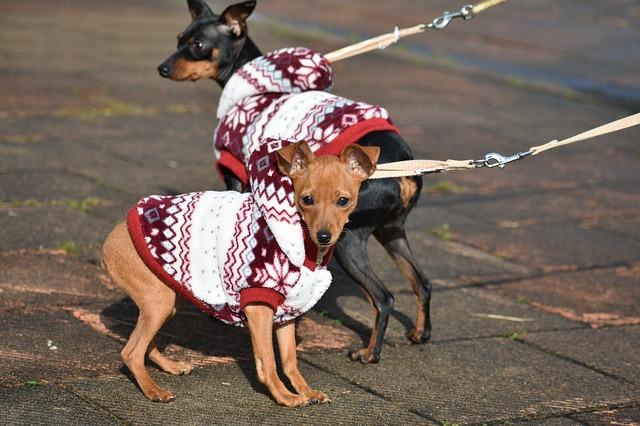 psi ve svetru